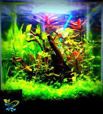 Aquascaping Shop Nano Tank Nature Aquascaping Surat Aquarium Shop In Surat