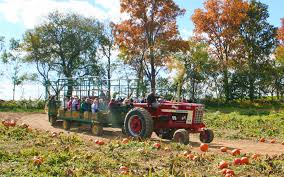 america s best pumpkin farms travel leisure