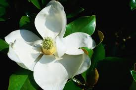 revealed the first flower 140 million years old looked like a