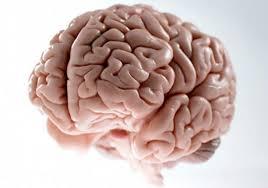 Scumbag Brain Meme Generator - scumbag brain blank template imgflip