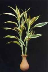 نباتات للتزيين الشرفة images?q=tbn:ANd9GcT