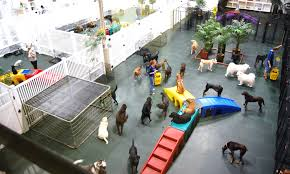 dog day care that offers daily activities and pampering for the