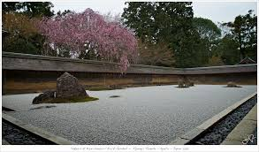 sakura at kare sansui rock garden ryoanji temple kyo u2026 flickr