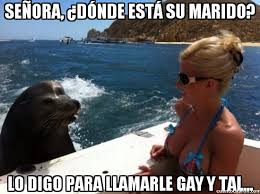 Meme Foca Gay - cu磧nto cabr祿n b禳squeda de homophobic seal en cuantocabron com