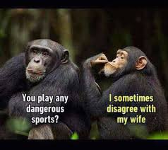 Ape Meme - dangerous sports disagree my wife funny meme funny memes