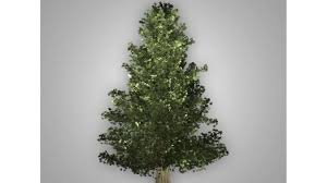free tree recycling drop starts jan 3