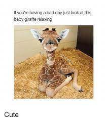 Bad Day At Work Meme - if you re having a bad day just look at this baby giraffe relaxing