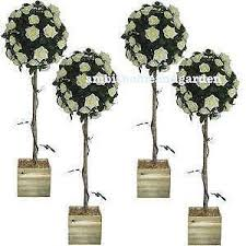 wedding trees wedding tree ebay
