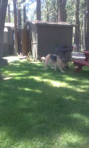 bring your pets to big bear frontier big bear frontier vacation blog