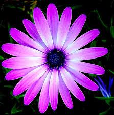 purple flower purple flower a photo on flickriver