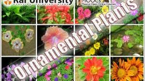 ornamental plant resource learn about and discuss