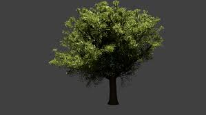3d realistic tree cgtrader