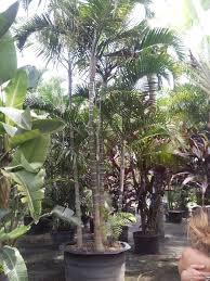 25 beautiful wholesale plants ideas on wholesale