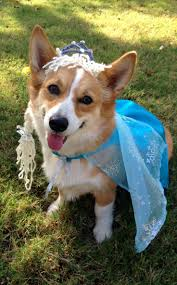34 best pet costumes images on pinterest costumes animals and