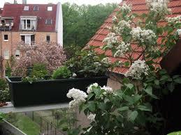 foto minze und flieder auf dem balkon klaus ahrens news tipps - Flieder Balkon