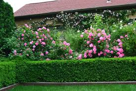 rose sallt holmes dirt simple