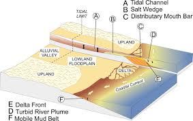 large river delta front estuaries as natural u201crecorders u201d of global