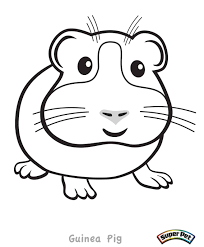 guinea pig coloring page free printable pages with diaet me