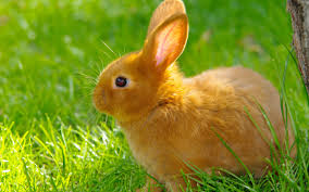 lovely best rabbit wallpapers images photos and pictures for free