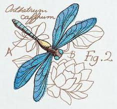printable dragonfly stencils free printable dragonfly stencil printables pretties pinterest