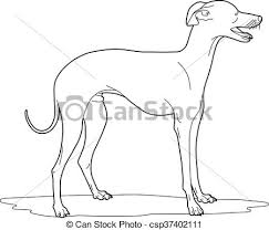 vector clip art of drawing of a cute dog vector illustration of