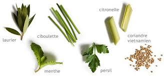 herbe cuisine faire pousser des herbes aromatiques en interieur partie 1