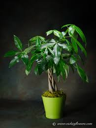 plants for funerals indoor plants for home office green plants vickies flowers