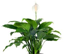 funeral plants the meaning 8 different types of popular funeral flowers