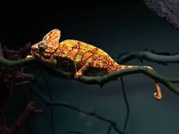 chameleon changing color animation wallpaper