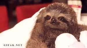 stoned sloth gif 6981 sloth gifs gifs sloth