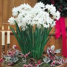 best 25 flower bulbs for sale ideas on autumn garden
