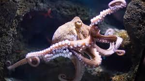 octopus ngsversion 1396531103222 jpg