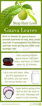 home remedies for hair loss for over 50 guava leaves are very effective home remedy to stop hair loss and