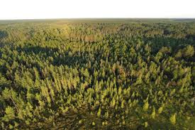 trump forest u201d why environmentalists are planting trees to thwart