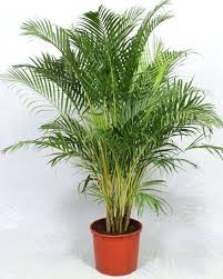 small low light plants small indoor plants for sale philippines low light australia bedroom