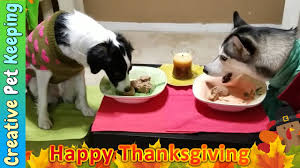 two dogs one thanksgiving dinner petsgiving