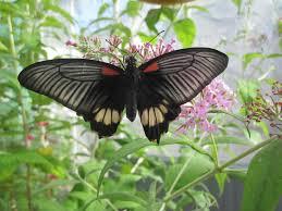 Butterfly House The Glasshouses Birmingham Botanical Gardens
