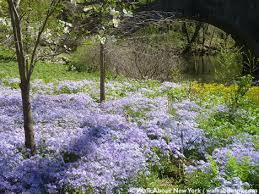 Botanic Garden Bronx by The New York Botanical Garden Spring 2016 Walkaboutny