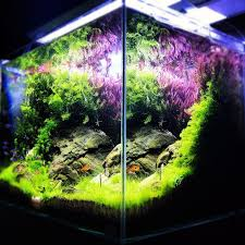 Takashi Amano Aquascaping Techniques 110 Best Aquascaping Inspiration Images On Pinterest Aquascaping
