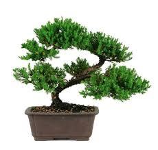 nursery tree wholesalers home garden 618 highland ln