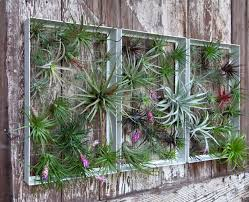 living wall art vertical garden frames by airplantman design milk