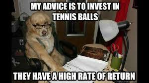 Benson Dog Meme - dog tennis ball meme animal memes pinterest dog and animal