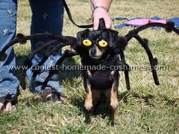 Small Dog Halloween Costumes 172 Creatures Costume Images Animals Dog