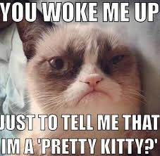 Meme Kitty - funny angry grumpy cat memes collection for friends family