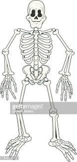 poseable skeleton fully poseable skeleton stock vectors clipart me