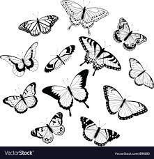 black and white butterflies royalty free vector image