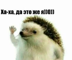 Hedgehog Meme - create meme hedgehog hedgehog hedgehogs hedgehog pictures