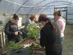 nursery native plants native plants nursery u2013 yarra valley ecoss