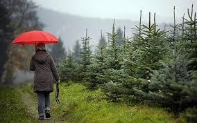 christmas tree price soars telegraph