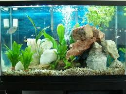 Live Plants In Community Aquariums by 29 Gallon Planted Freshwater Community Fish Tank Youtube